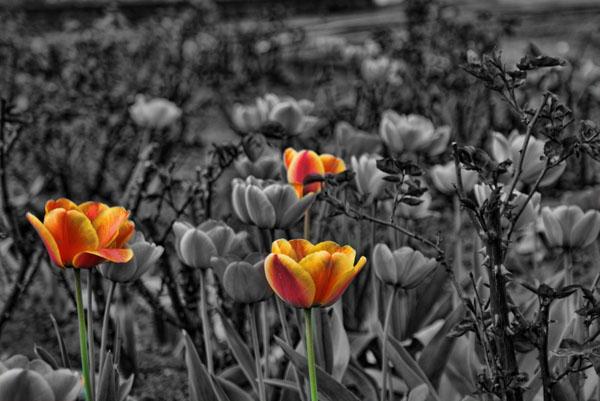 zdjęcia czarno-buiałe